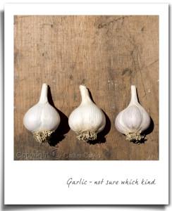 Garlic01