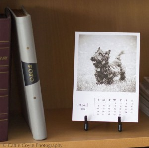 The 2014 Holiday Card Collection and 2015 Scottish Terrier Monthly Calendar