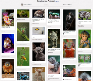 Favorite Pinterest Board Of The Week: Fascinating Animals